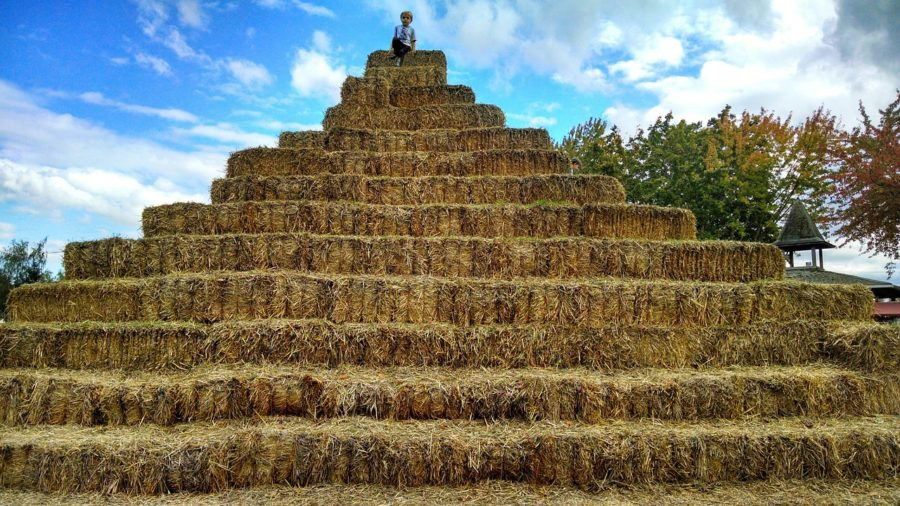 Hay rides and mazes fall fun